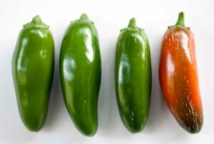 Green and Red Jalapeno Peppers
